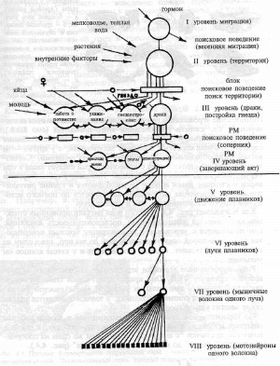 Схема организации инстинкта по